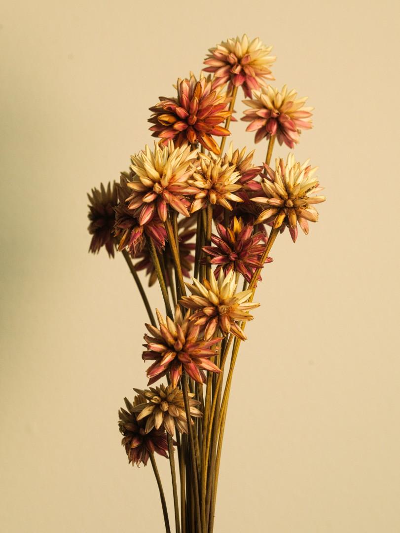 Flor de Inirida